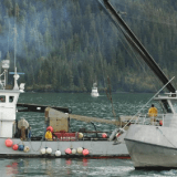 Image for Federal Government Announces New Support for Fish Harvesters