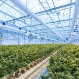 Image for Development of New Sales Programs by B.C. to Benefit Cannabis Producers and Indigenous Businesses