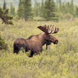 Image for SK Court: Only Certain Treaties Allow for Hunting in Saskatchewan